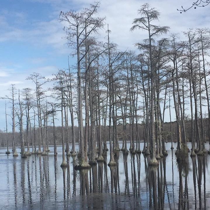 Tall cypress trees that enchant the eye and a Civil War-era mill pond that abounds with wildlife can all be found at Goodale State Park. The park is named for N.R. Goodale, a local florist that pushed for the creation of this park