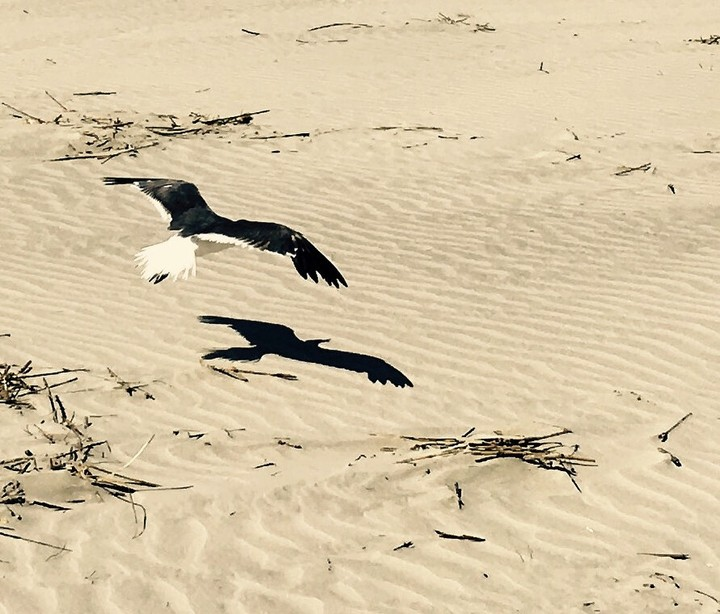 A bird combing the beach at Kiawah Island