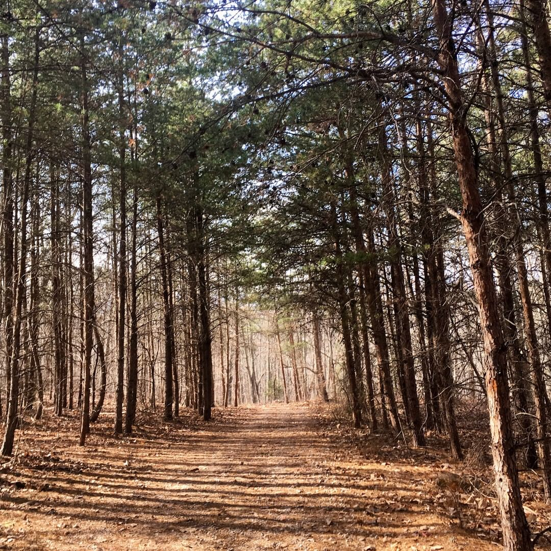A trail on Nanny Mountain in York County near Lake Wylie. Nanny is a monadnock, with an elevation of 981 feet. Iron was mined from the mountain and used during the revolutionary war
